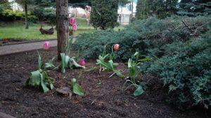 Kwiaty w naszym ogródku